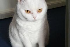 GOLD CAT Katzenbetreuung Hamburg, Qualifizierter Katzensitter Hamburg Marcel Danch mit Sachkundenachweis, Katzensitting während des Urlaubs zu Hause, (26)
