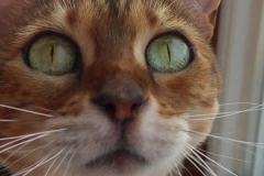 Hamburg Katzenbetreuung GOLD CAT, Ihr mobiler Katzensitter bei Ihnen zu Hause, Katzensitter, Katzensitting, Catsitter, Catsitting (27)