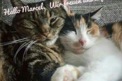 Hamburg Katzenbetreuung GOLD CAT, Ihr mobiler Katzensitter bei Ihnen zu Hause, Katzensitter, Katzensitting, Catsitter, Catsitting, Hamburg Bramfeld (1)