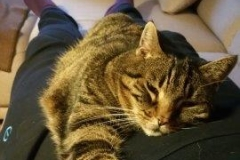 Hamburg Katzenbetreuung GOLD CAT, Ihr mobiler Katzensitter bei Ihnen zu Hause, Katzensitter, Katzensitting, Catsitter, Catsitting Hamburg Winterhude (2)