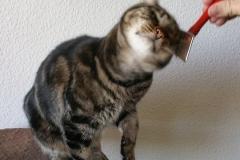 Katzenbetreuung GOLD CAT Hamburg, Mobiler Katzensitter, Tierbetreuung für Katzen, Catsitter Marcel Danch, (1)