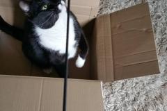 Katzenbetreuung GOLD CAT Hamburg, Mobiler Katzensitter, Tierbetreuung für Katzen, Catsitter Marcel Danch, (17)