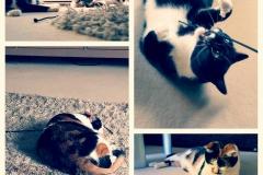 Katzenbetreuung GOLD CAT Hamburg, Mobiler Katzensitter, Tierbetreuung für Katzen, Catsitter Marcel Danch, (18)