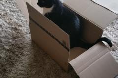 Katzenbetreuung GOLD CAT Hamburg, Mobiler Katzensitter, Tierbetreuung für Katzen, Catsitter Marcel Danch, (3)