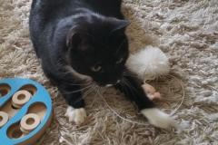 Katzenbetreuung GOLD CAT Hamburg, Mobiler Katzensitter, Tierbetreuung für Katzen, Catsitter Marcel Danch, (7)
