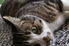 Katzenbetreuung Hamburg GOLD CAT, katzensitter Marcel Danch mit Qualifikationen, Katzensitter Hamburg gesucht Katzensitter Hamburg Wandsbek,Rahlstedt, Famsen,GOLD CAT,mobiler Katzensitter, Tierbetreuung ( (6619274)
