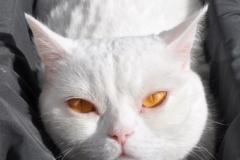 Katzenbetreuung Hamburg GOLD CAT, katzensitter Marcel Danch mit Qualifikationen, Katzensitter Hamburg gesucht Katzensitter Hamburg Wandsbek,Rahlstedt, Famsen,GOLD CAT,mobiler Katzensitter, Tierbetreuung ( (6619290)
