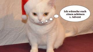 Weihnachtszeit mit Ihrer Katze und den GOLD CAT Katzentipps