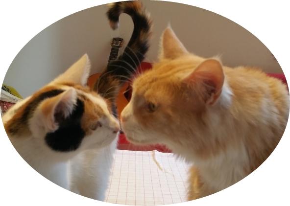 Katzenliebe Ablauf der Katzenbetreuung GOLD CAT Ihr Katzensitter Marcel